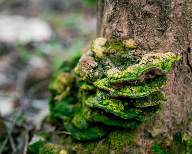 霊芝は、乾いた木の幹に生えています。