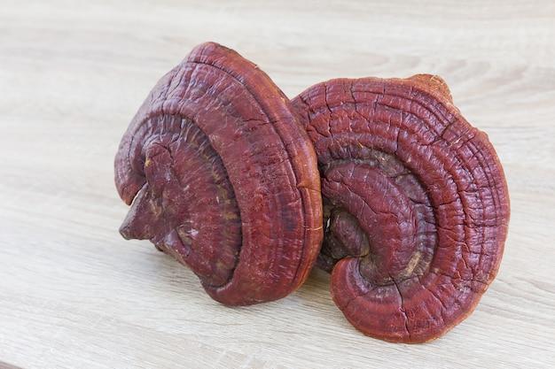 Ganoderma lucidum mushroom on wood