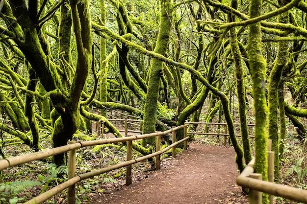 Национальный парк гарахонай, лавровый лес, лаурисильва, ла гомера, канарские острова, испания