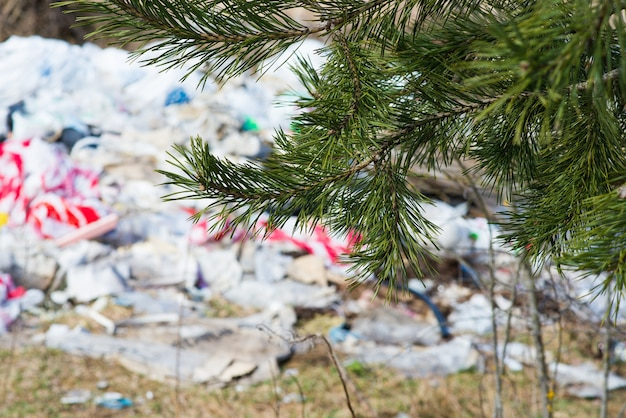 Мусорная свалка в лесу, лесу. экологические проблемы