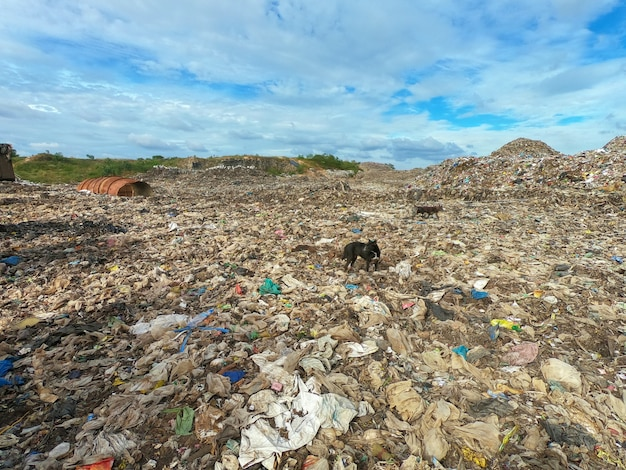 Garbage in municipal landfill for household waste