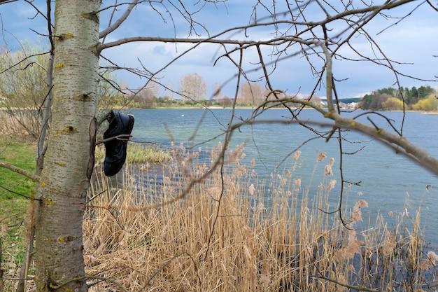 Мусор, загрязняющий природу. на дереве висит старый сапог. концепция уважения к природе. фото высокого качества