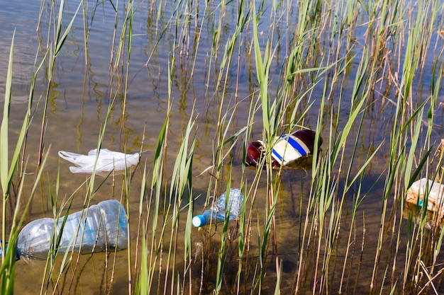 Garbage in the water among the reeds