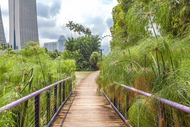 A garden among the skyscrapers in the center of singapore.
