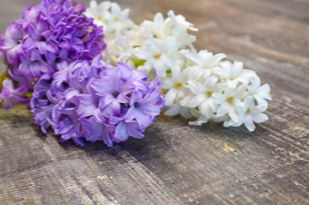 Garden beautiful purple fresh flowers
