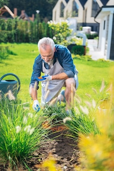 Garden bed. bearded mature man wearing striped apron over his blue shirt working in his garden bed