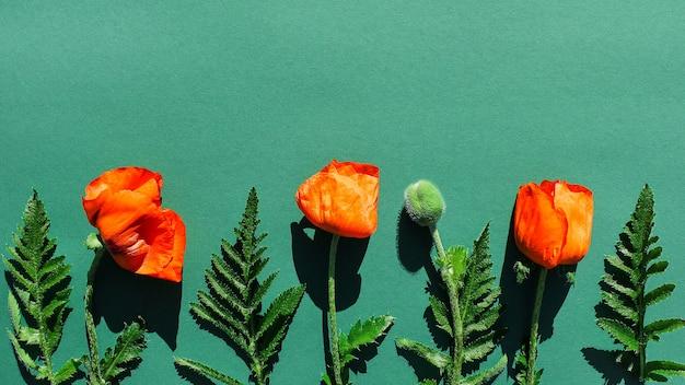 Garden bright poppies on a green background