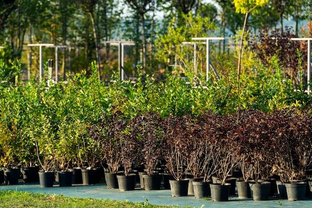 탁 트인 땅에 심기 위해 욕조에 녹지가 심어진 정원 센터
