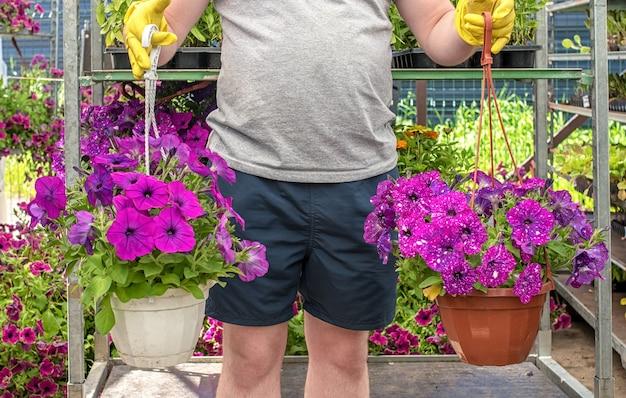 Работник садового центра держит горшок с красивыми сиреневыми петуниями. готовимся к летнему сезону.