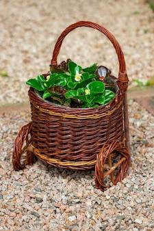 Садовая композиция с цветами в круглой плетеной кашпо, баске.
