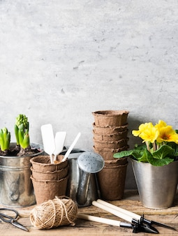 Garden composition with hyacinths and primrose in a pots and garden tools on rustic wood table