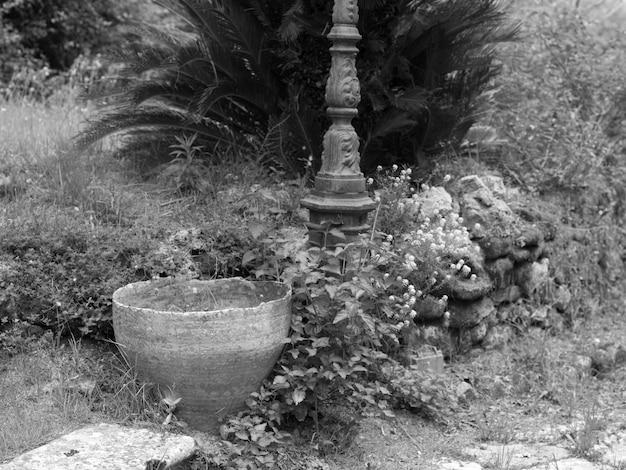 Garden in corfu
