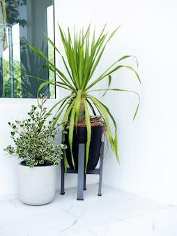 ガーデンコーナー。最小限の白い建物、垂直スタイルの隅にある大理石の床に緑の葉の装飾が施された 2 つのシンプルなスタイルの植木鉢。