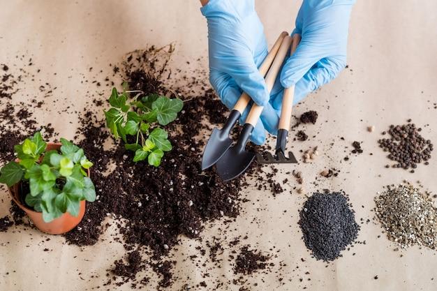 手袋をはめた手で園芸用品。屋内ガーデニングのコンセプト。植え替え用の基本的なツールセット。