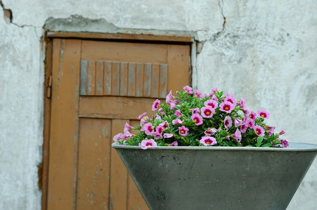 Садовые цветы в вазе на фоне старой двери