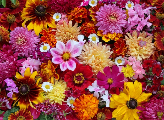 Garden flowers, top view.