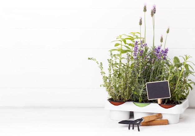 Garden fresh herbs and gardening tools