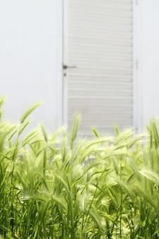 ガーデングリーンスパイクハウスホワイトドア