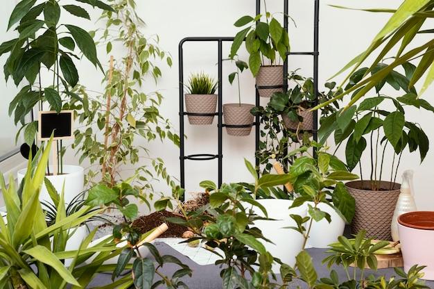 Garden at home concept
