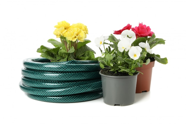 Garden hose and flowers isolated on white