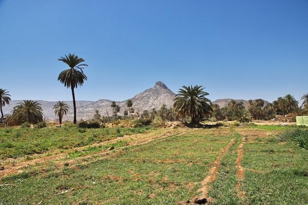 サウジアラビア、ナジュラーン、アラブ村の庭園