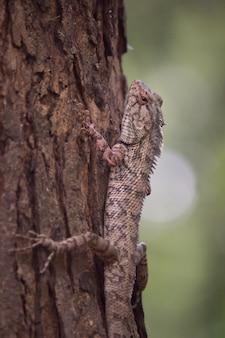 木の幹に庭のトカゲ