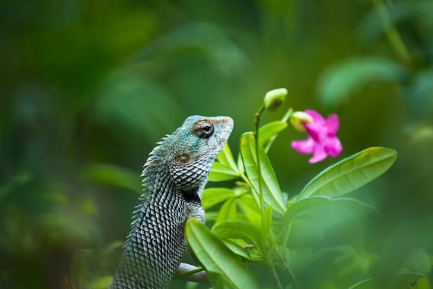 ガーデントカゲまたは植物の枝にあるオリエンタルプラントトカゲとしても知られています