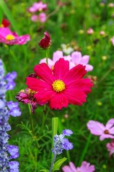 겨울에 정원 자연의 밝은 다채로운 꽃밭.
