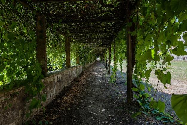 ポルトガルのトマールで日光の下で緑に囲まれたキリストの修道院の庭