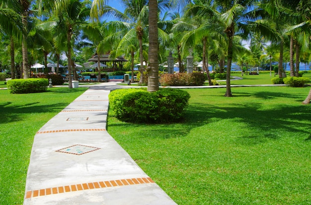 Garden or park with path