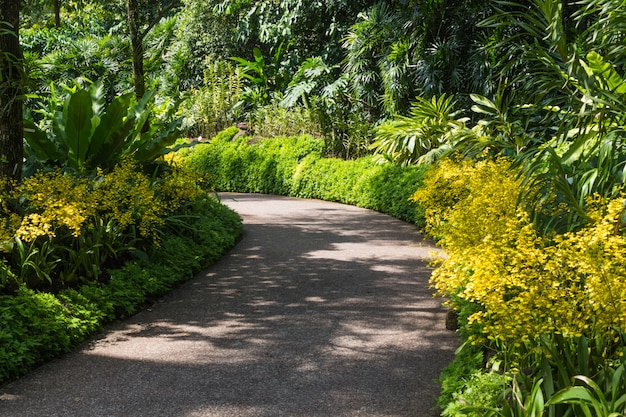 Garden path with orchids