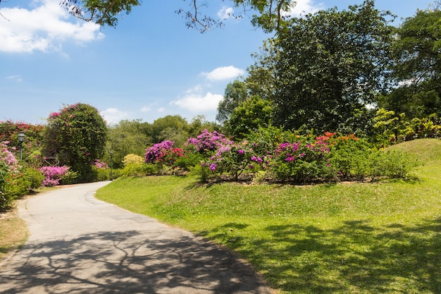Garden path with purple  flowering plants