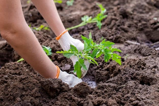 植物を植える庭