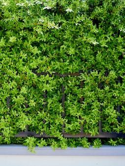 壁の庭の植物