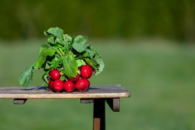 Редис на деревянном столе на заднем дворе в летнее время