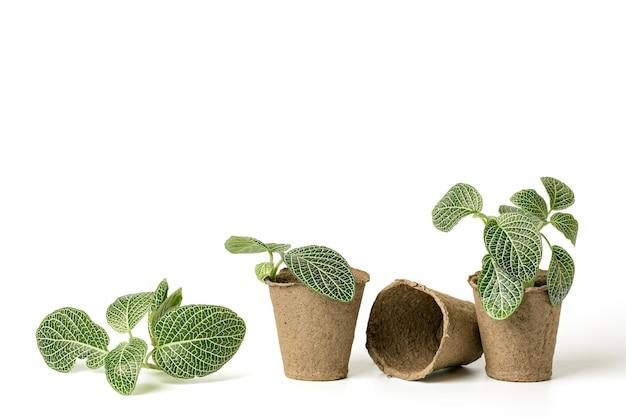 흰색 배경에 파종 종자를 재배하기 위해 생분해 성 섬유로 만든 친환경 식물 화분 내부의 정원 묘목