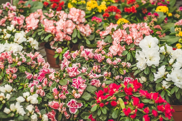 Garden shop. many colorful flowerpot in the store, close up. nursery of plants and flowers for gardening. botanical garden, flower farming, horticultural industry concept