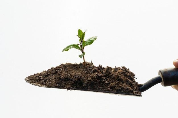 Садовая лопата на белом фоне с молодым растением