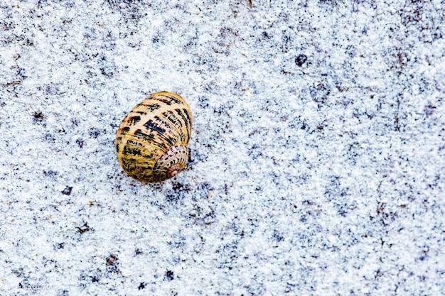 Garden snail climbing a rough grey wall