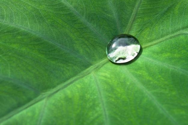 정원 질감 식물 추상 시즌