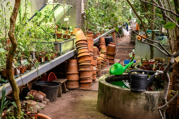 Garden tools. clay pots for seedlings. beautiful botanical garden. beautiful green plants. greenery around.
