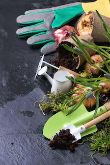 Garden tools and flower bulbs