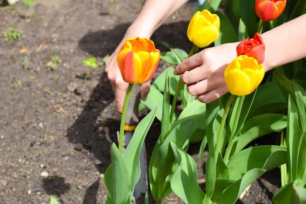 Садовые инструменты. красные тюльпаны в саду. садоводство летом на природе