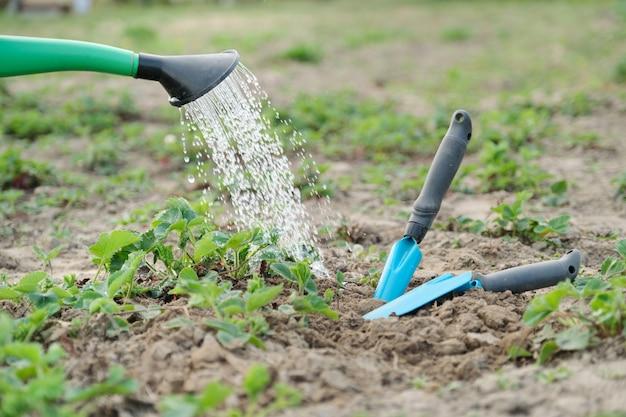 Полив сада можно залить поливом клубники