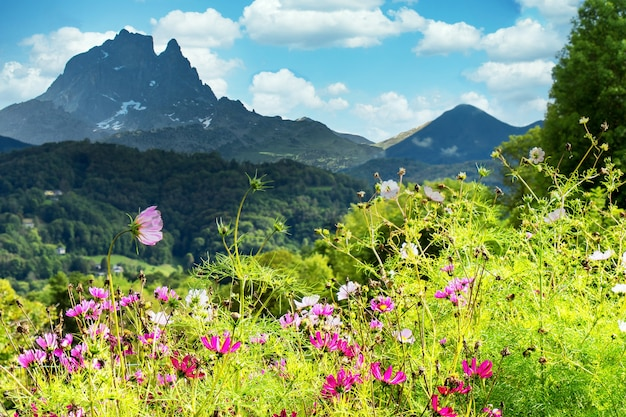 Сад с цветами, пик миди-оссау, французские пиренеи