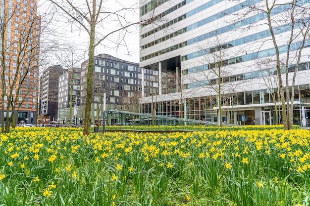 Сад с множеством желтых полевых цветов возле высоких небоскребов