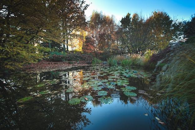가을 색의 연못이 있는 정원
