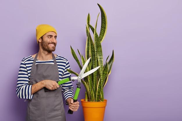 Concetto di lavoro in giardino. allegro fiorista o botanico taglia pianta in vaso con cesoie da giardinaggio, indossa maglione a righe e grembiule