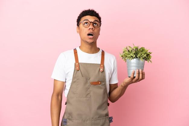 Африканский мужчина-садовник, держащий растение, изолированное на розовом фоне, смотрит вверх и с удивленным выражением лица