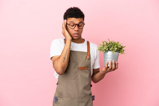 頭痛とピンクの背景に分離された植物を保持している庭師アフリカ人